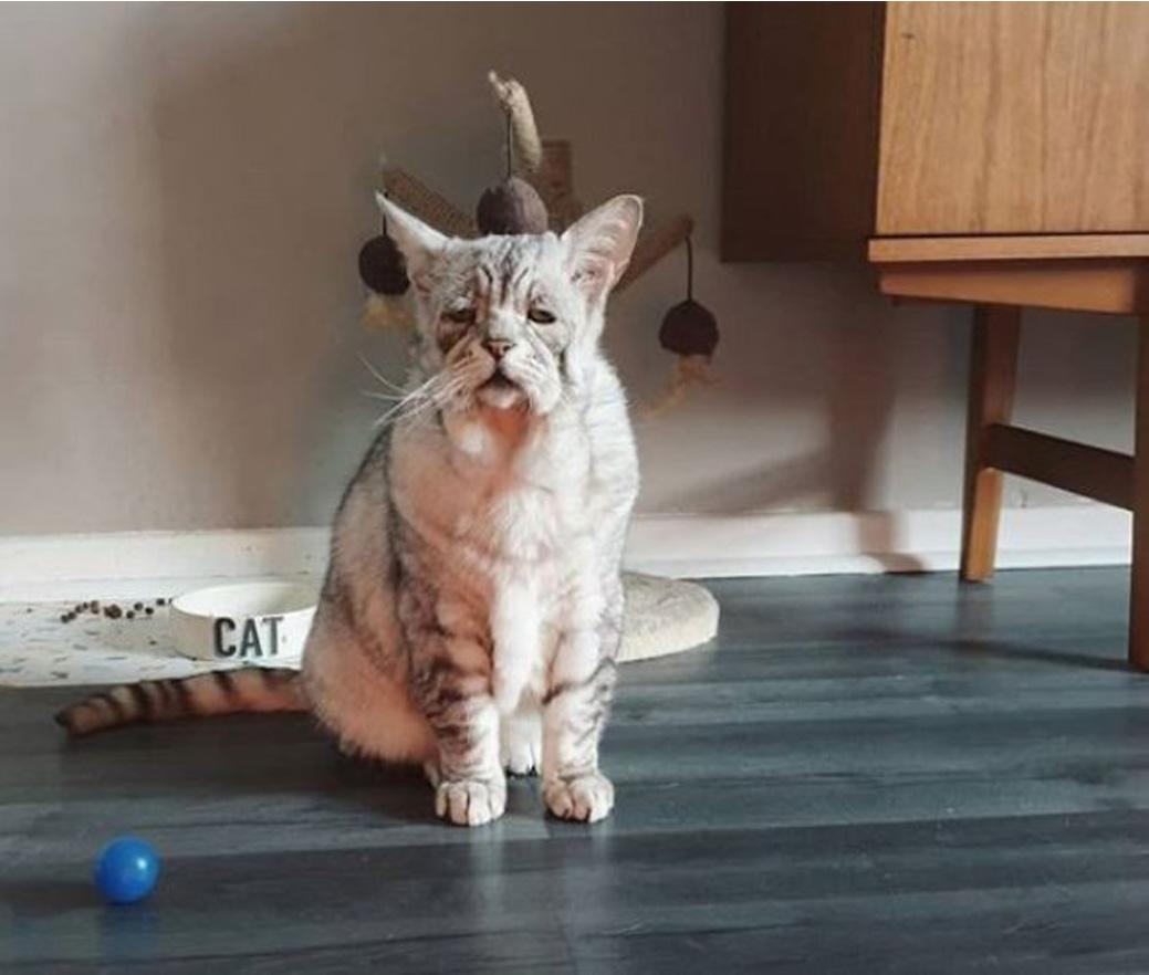Un gatto con la sindrome di Ehlers - Danlos
