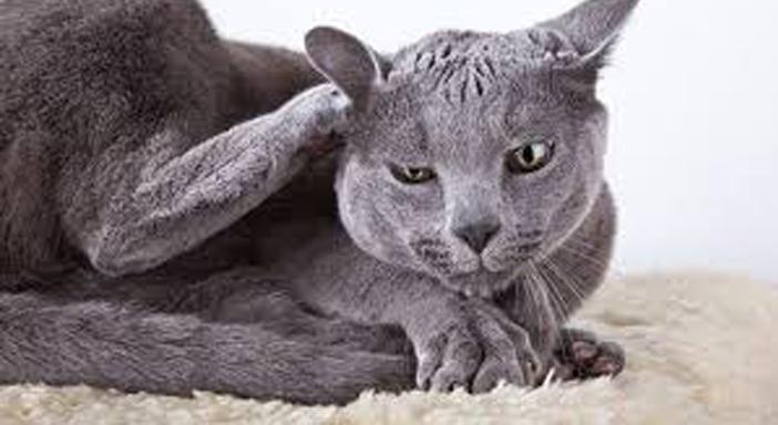 Un gatto mentre si gratta
