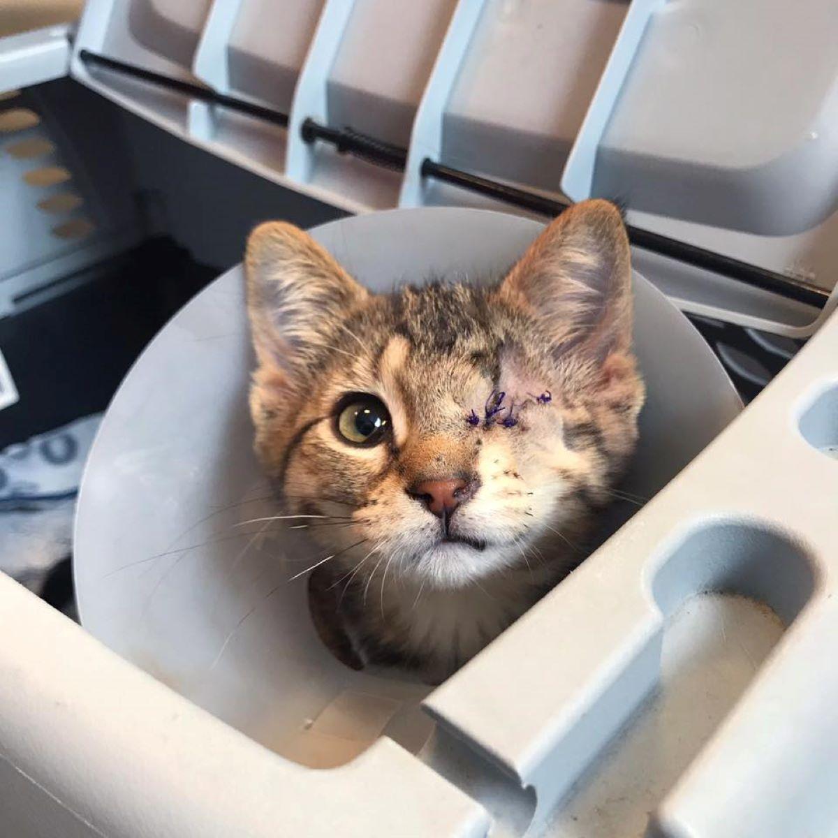 gattino-con-occhio-cucito