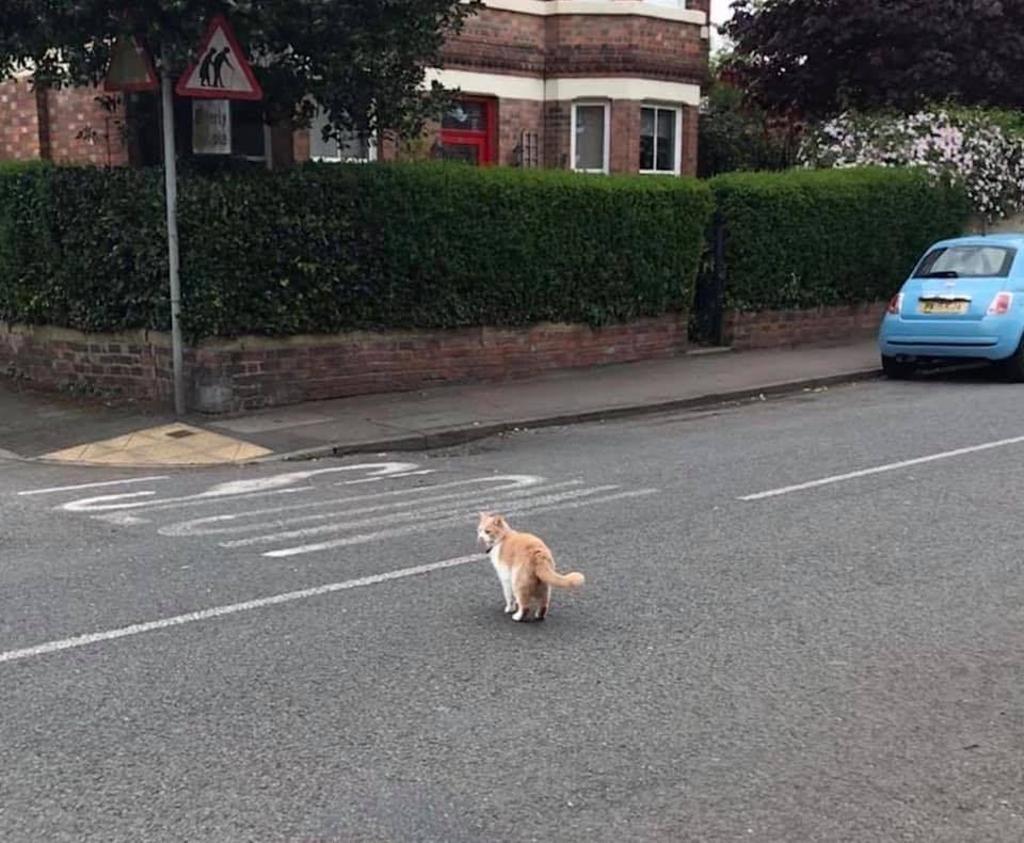 gatto-che-cammina-per-strada