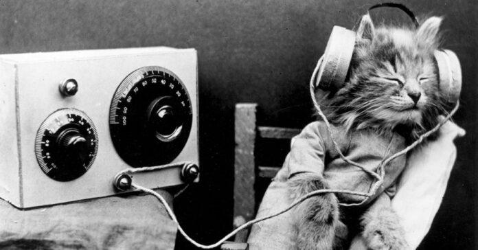gattino-con-cuffia-e-radio