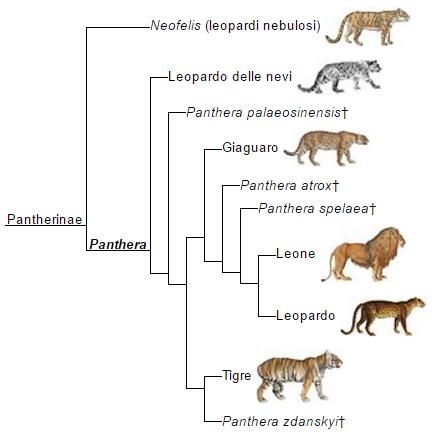 albero genetico pantherinae