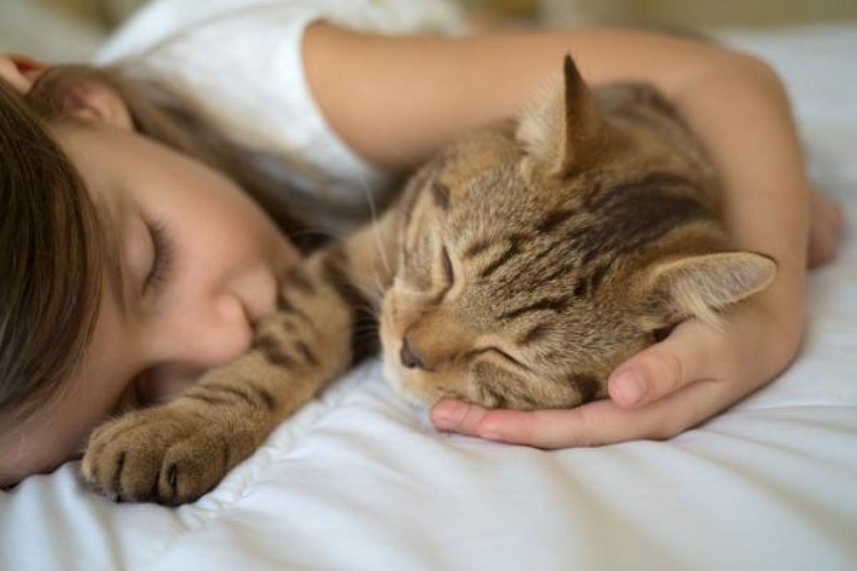 gatto-e-bambina