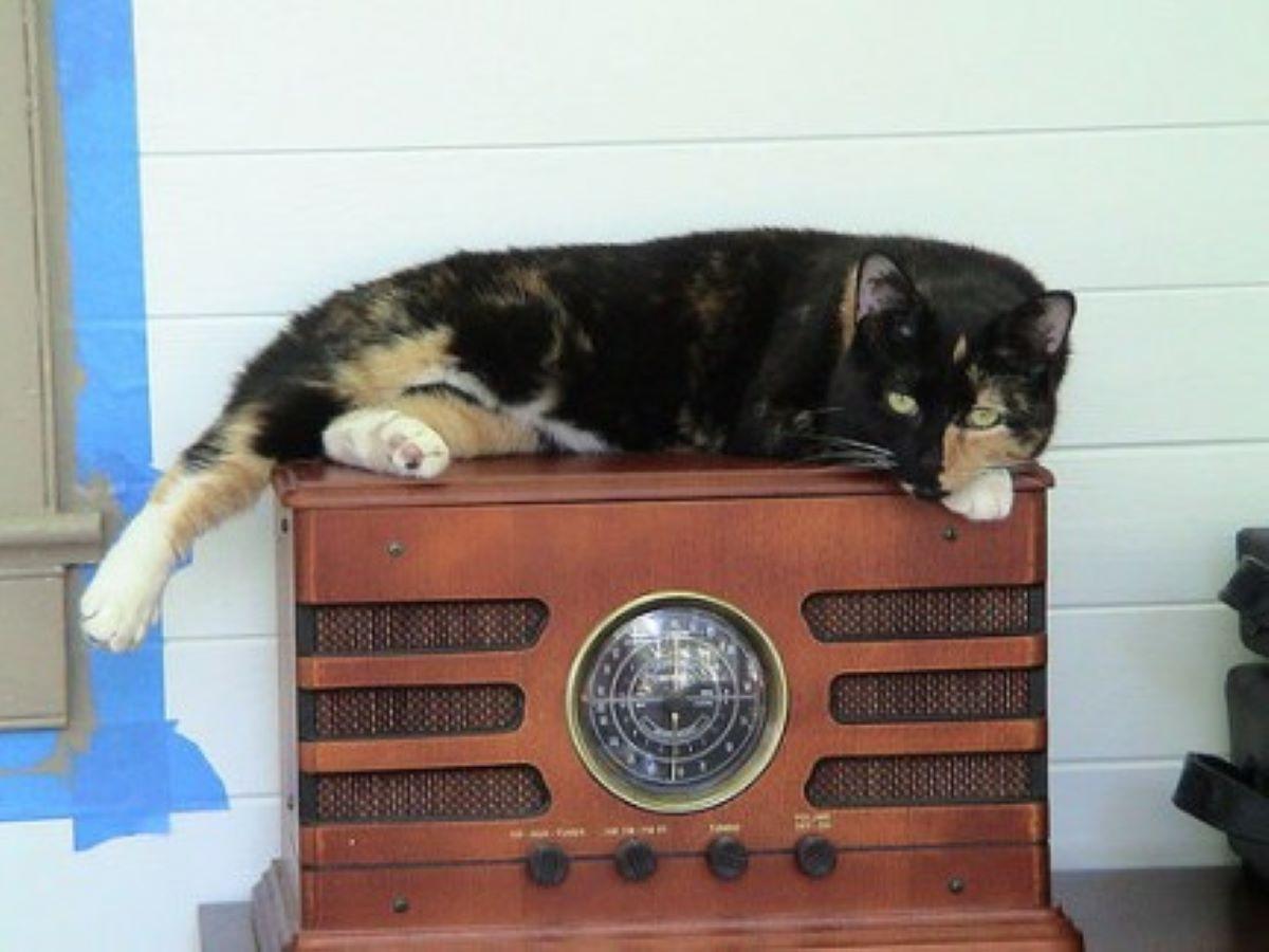 gatto-su-radio