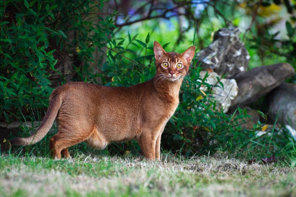gatto-che-osserva
