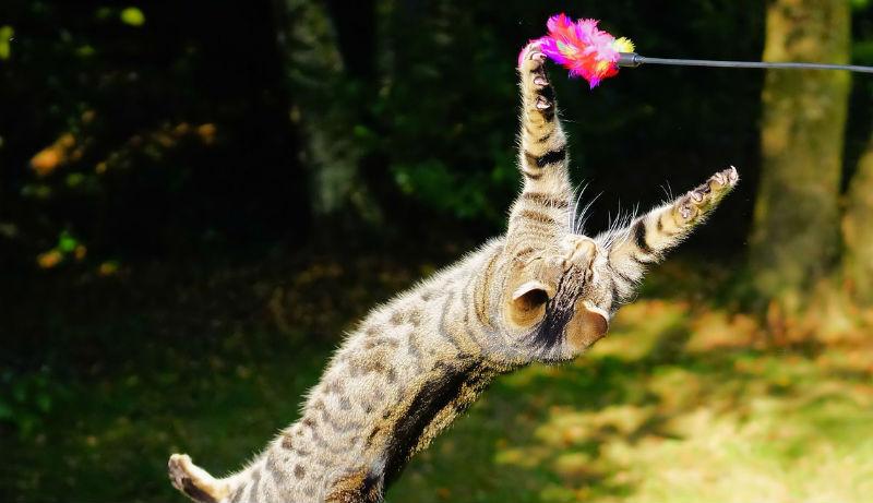 gatto che salta in natura