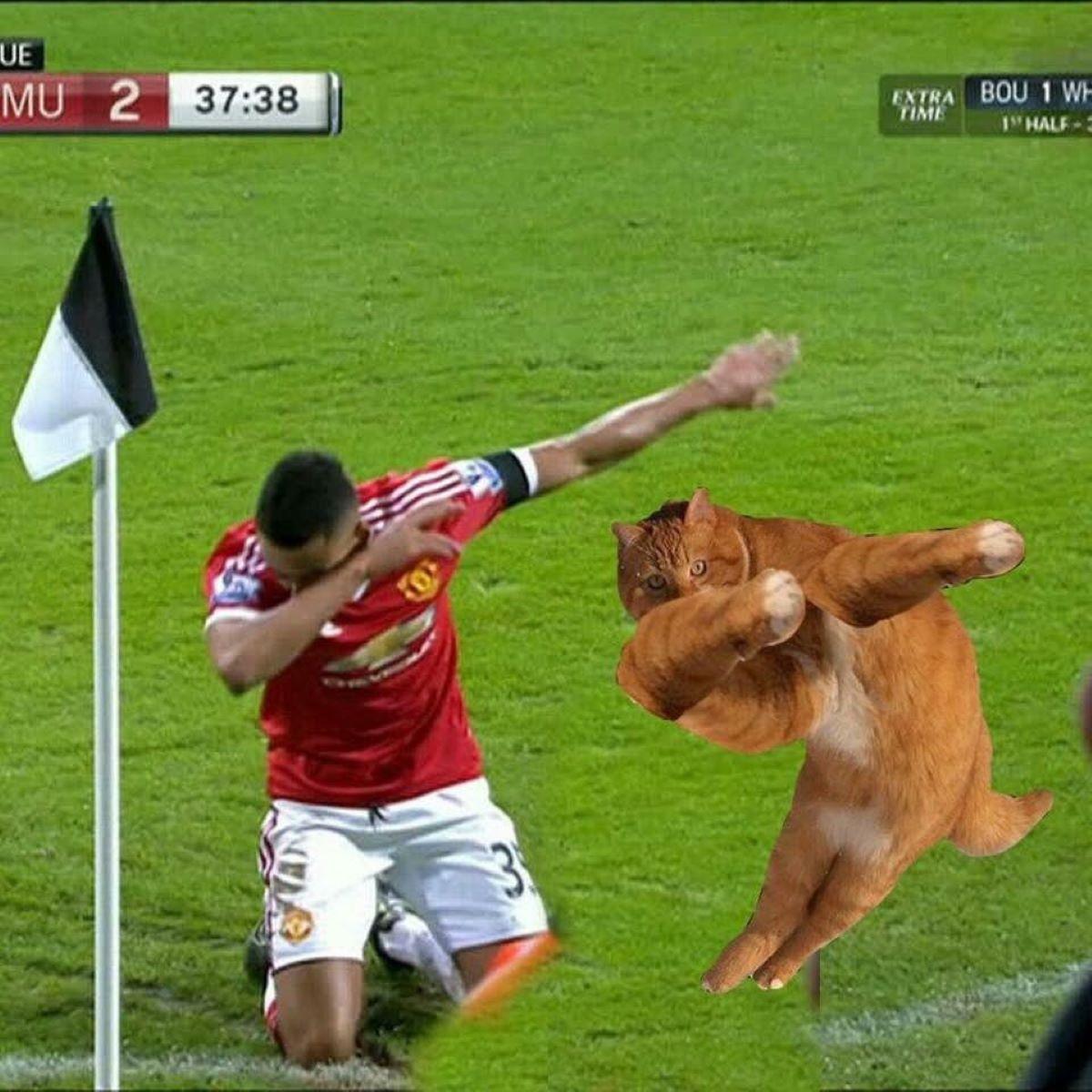 gatto-che-balla