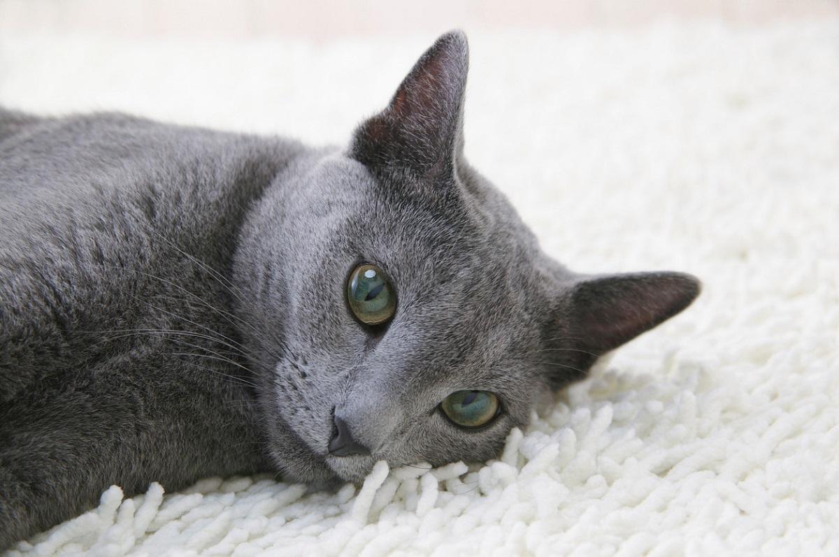 blu di russia su tappeto