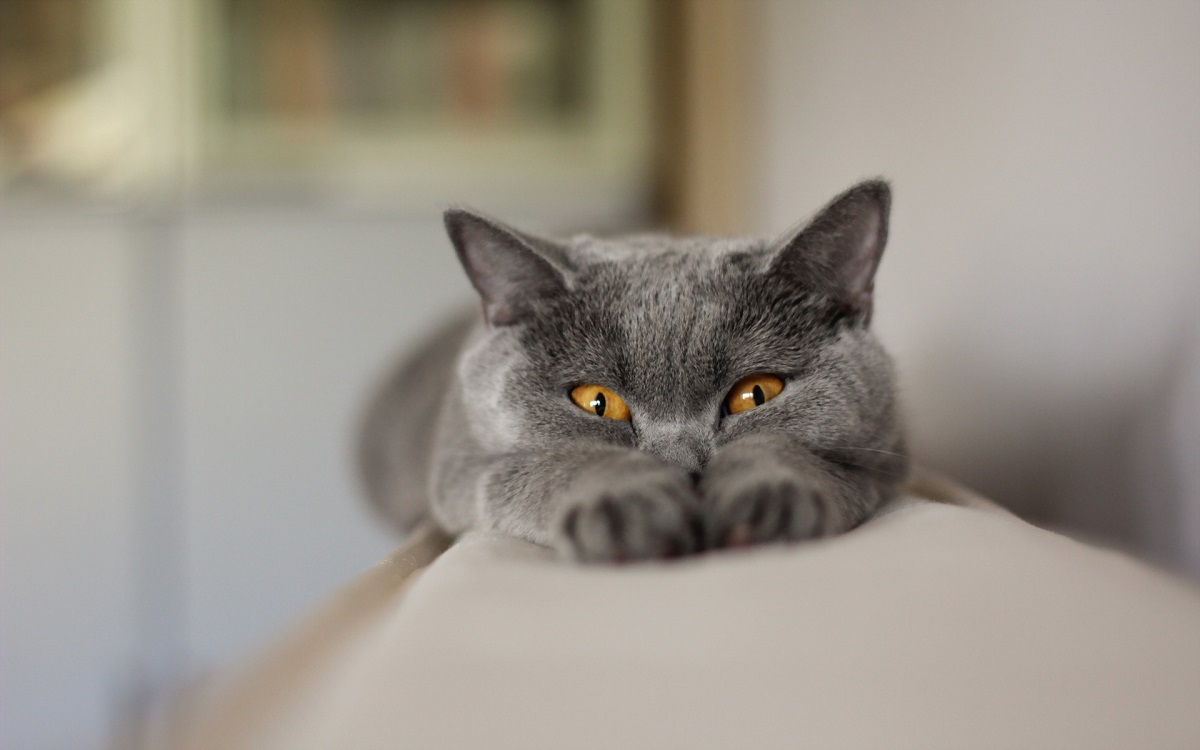 certosino su divano