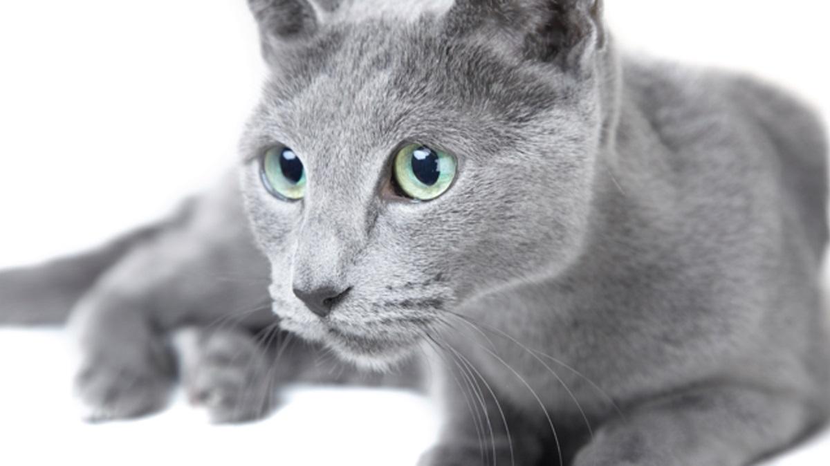 blu di russia su sfondo bianco