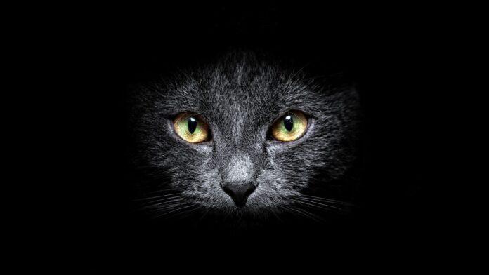 Gatto mammone: la favola