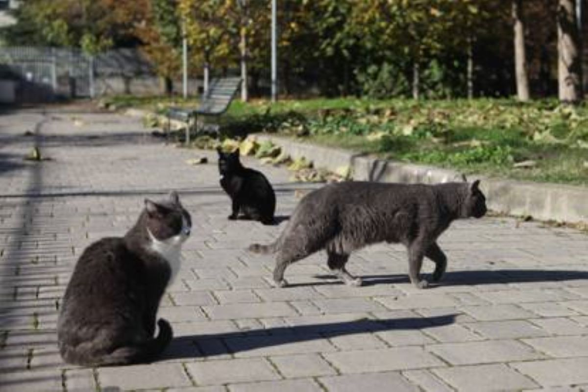 gatti-che-gironzolano-in-strada