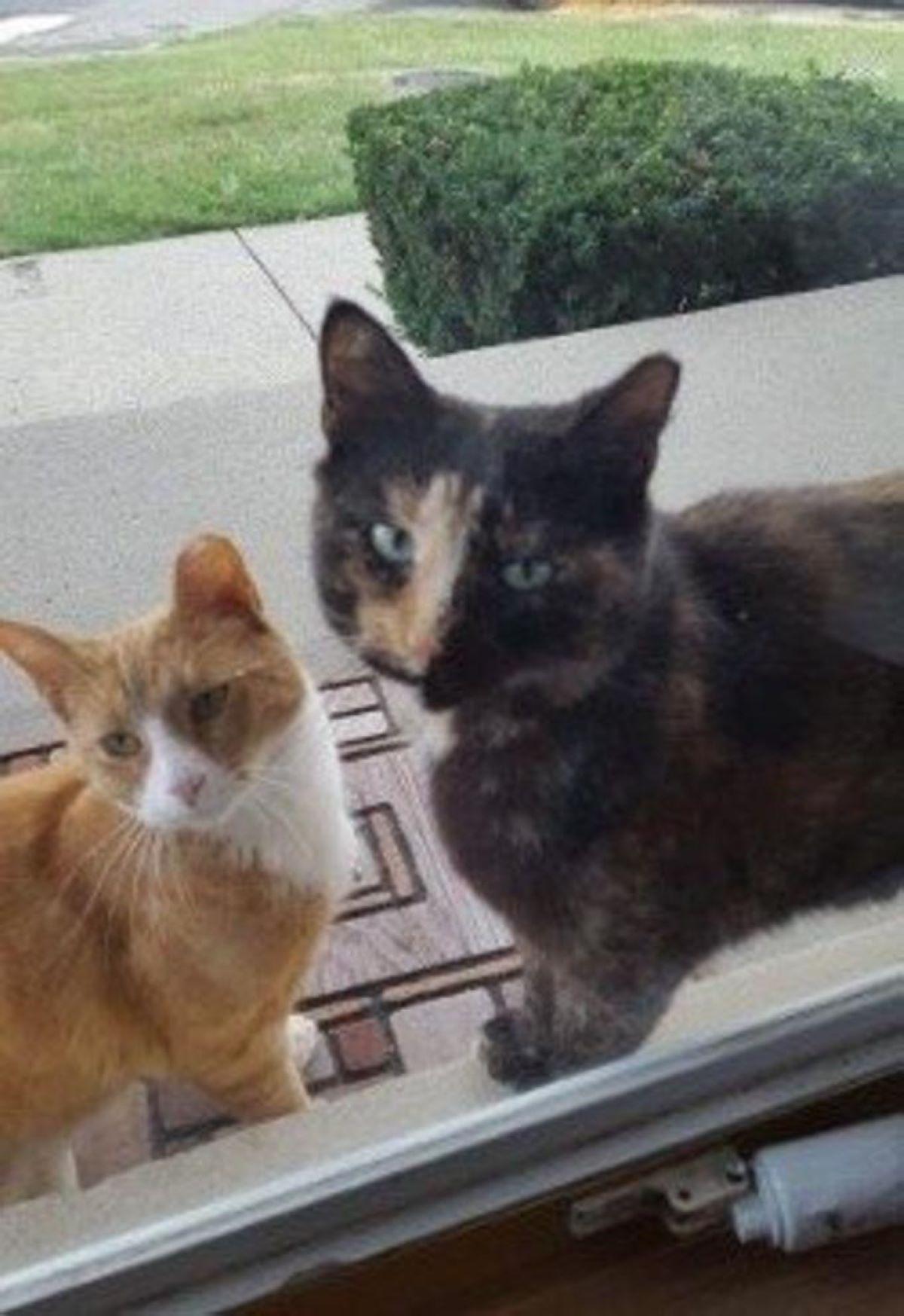 due-gatti-davanti-alla-porta