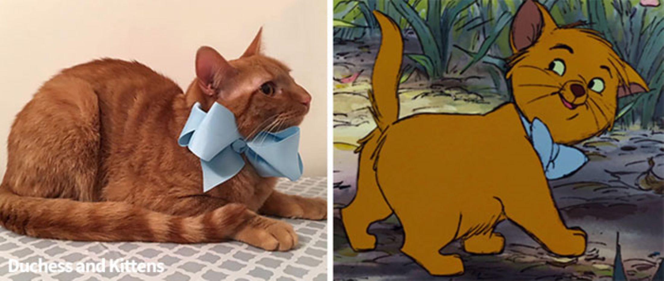 gatto-arancione-con-fiocco-blu