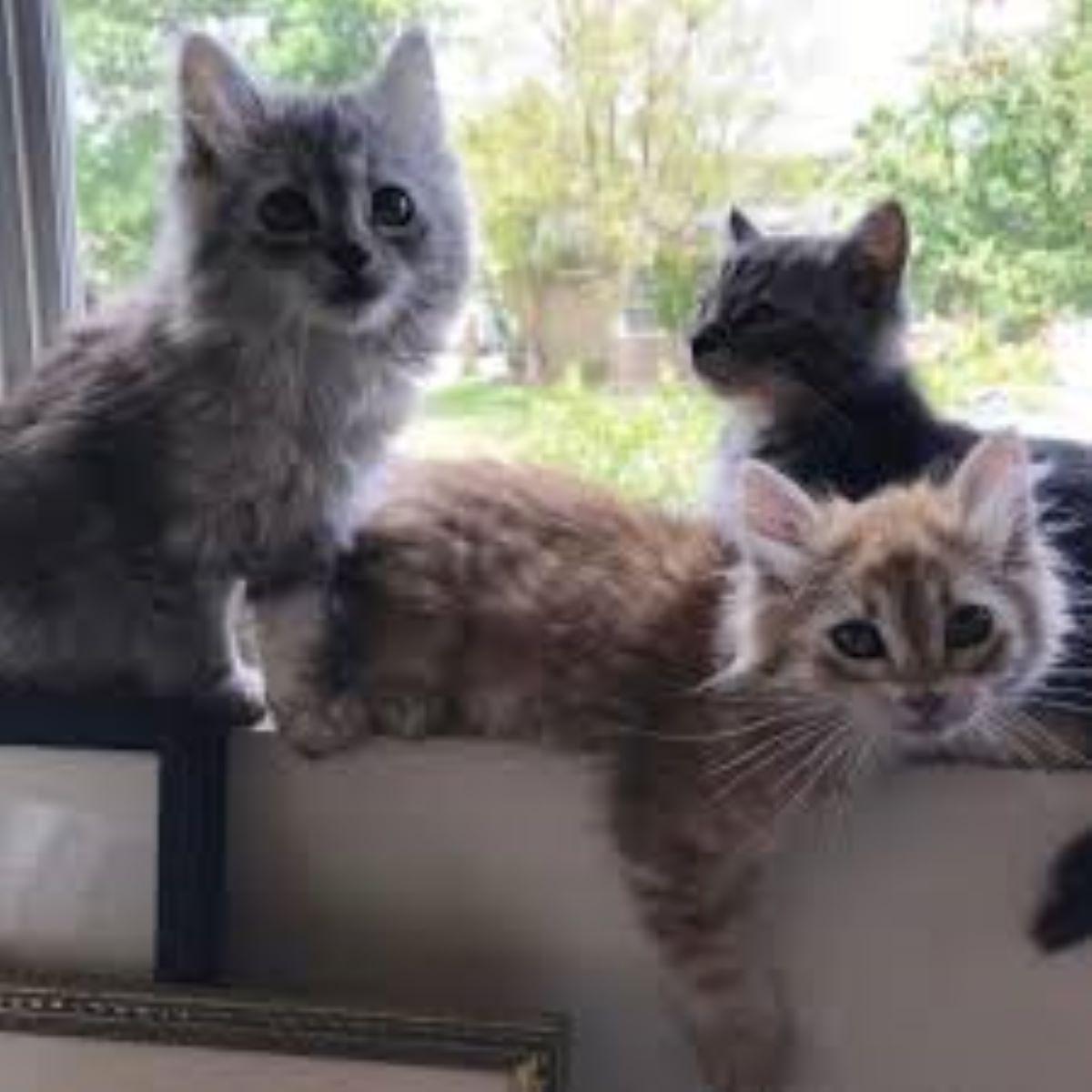 tre-gattini-vicino-alla-finestra