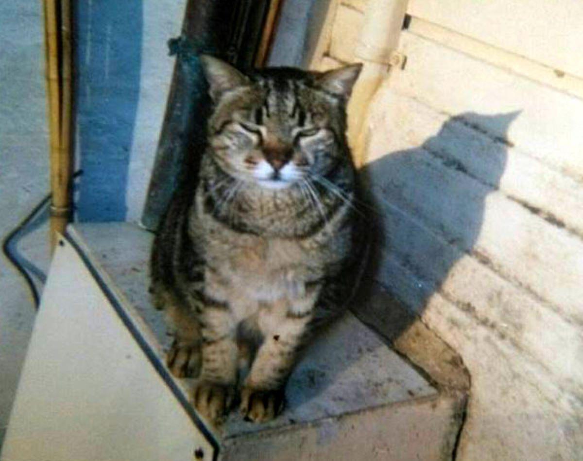 gatto-con-occhi-socchiusi