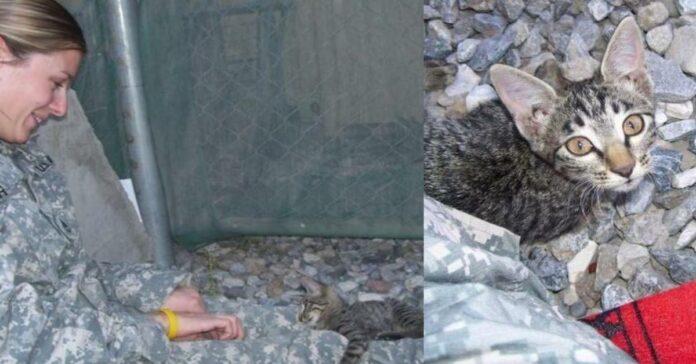 gattino-con-soldatessa
