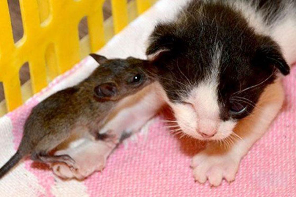 topolino-che-bacia-gatto