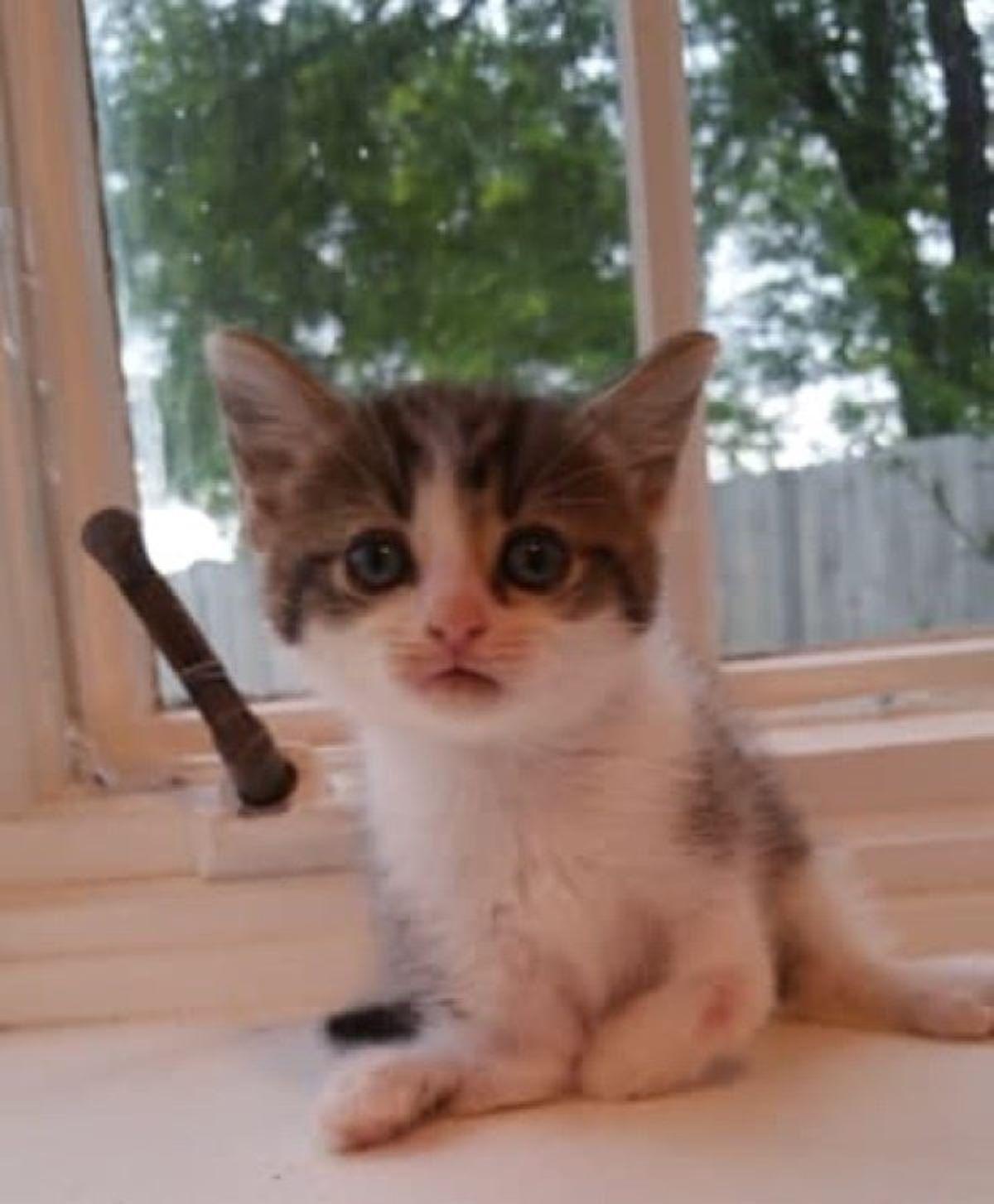 gattino-con-zampe-storte