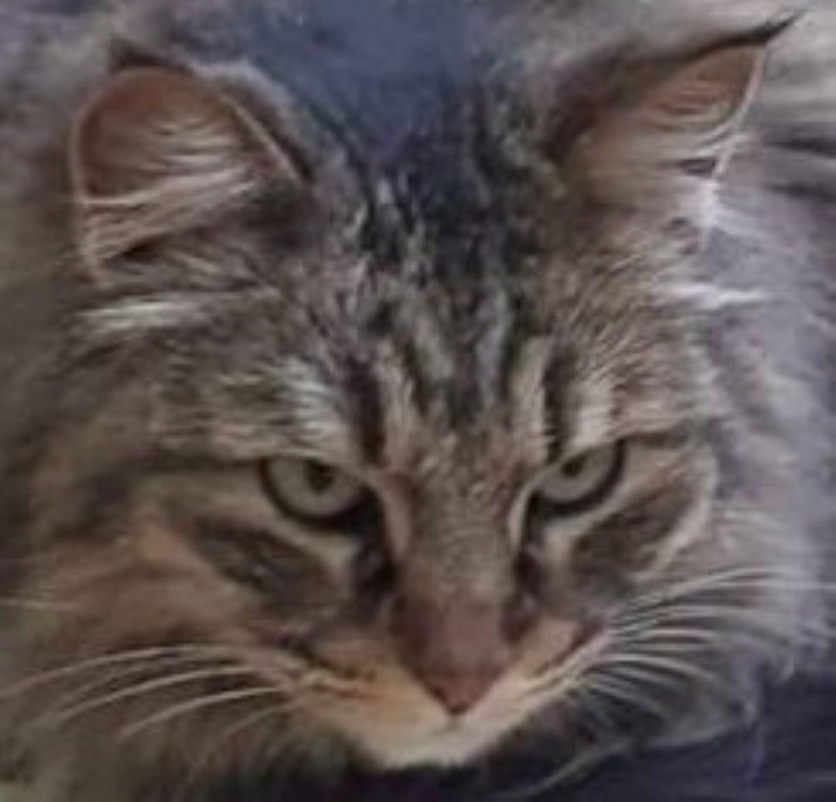 primo-piano-di-un-gatto