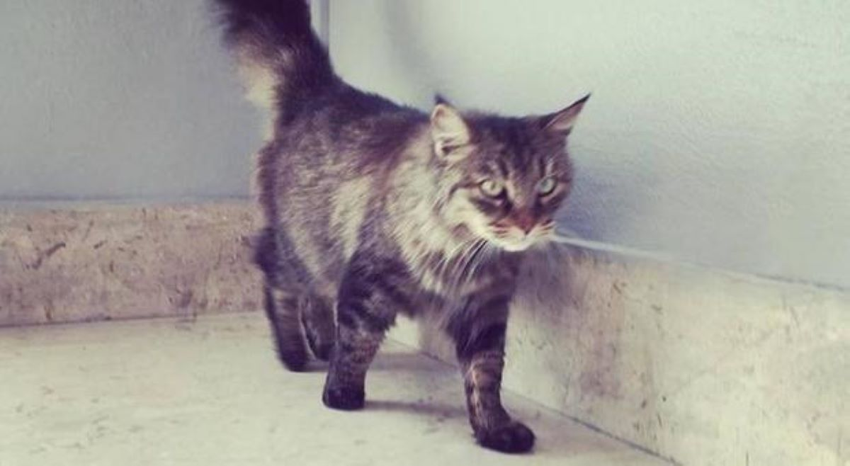 gatto-vicino-a-muro