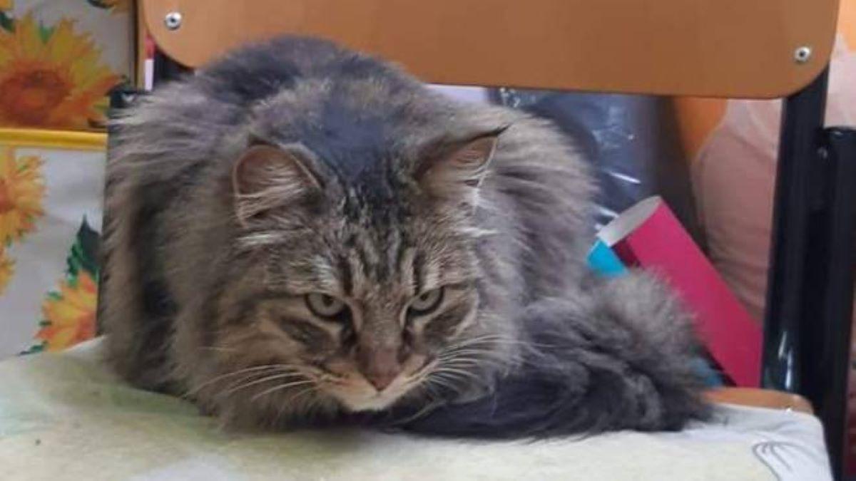 gatto-su-sedia