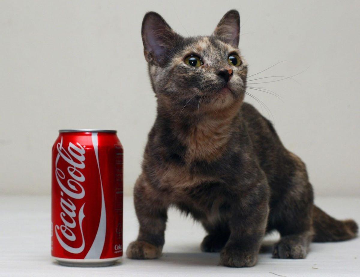 gatto-piccolo-con-lattina
