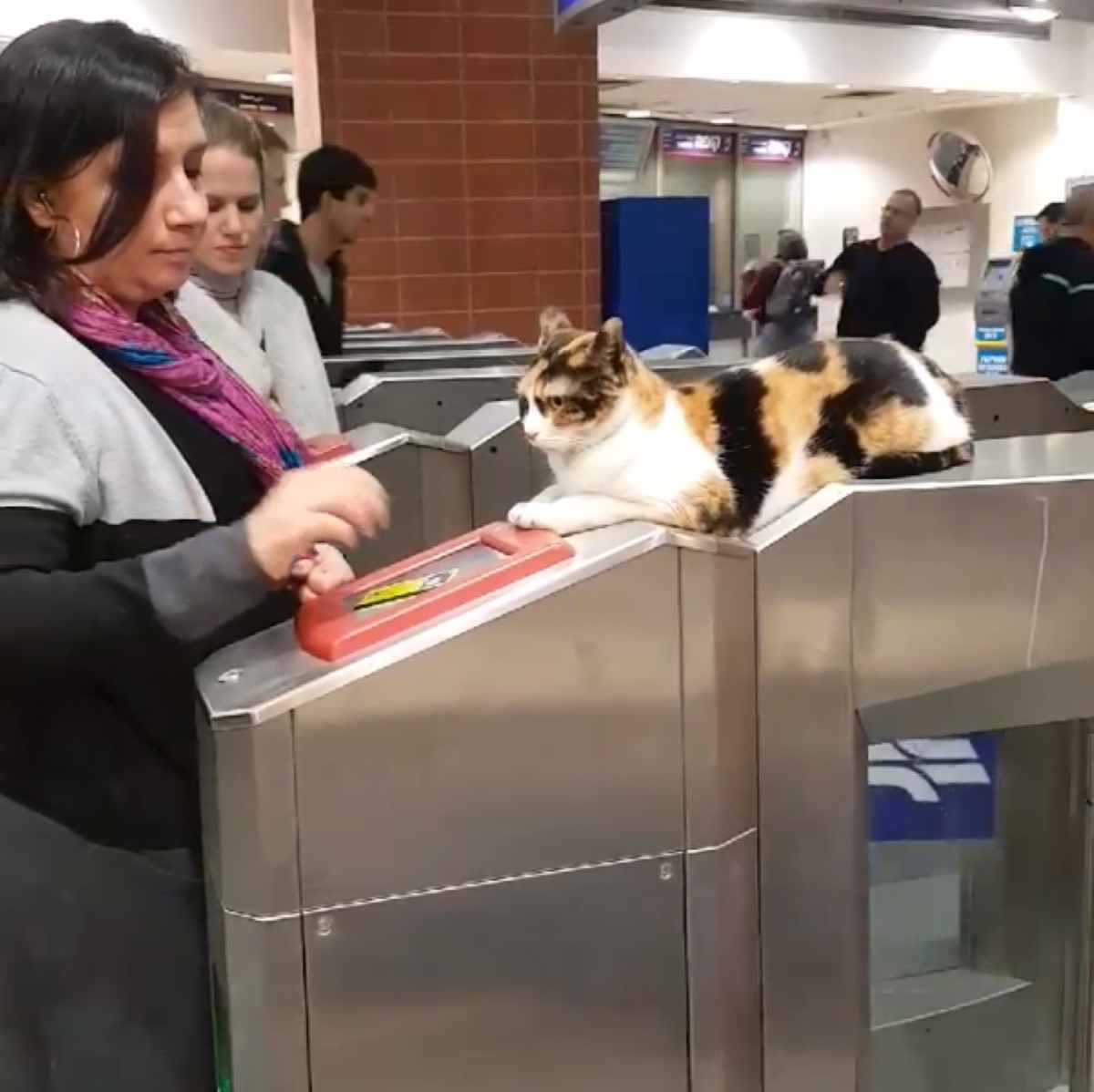 gatta-che-guarda-donna-alla-stazione