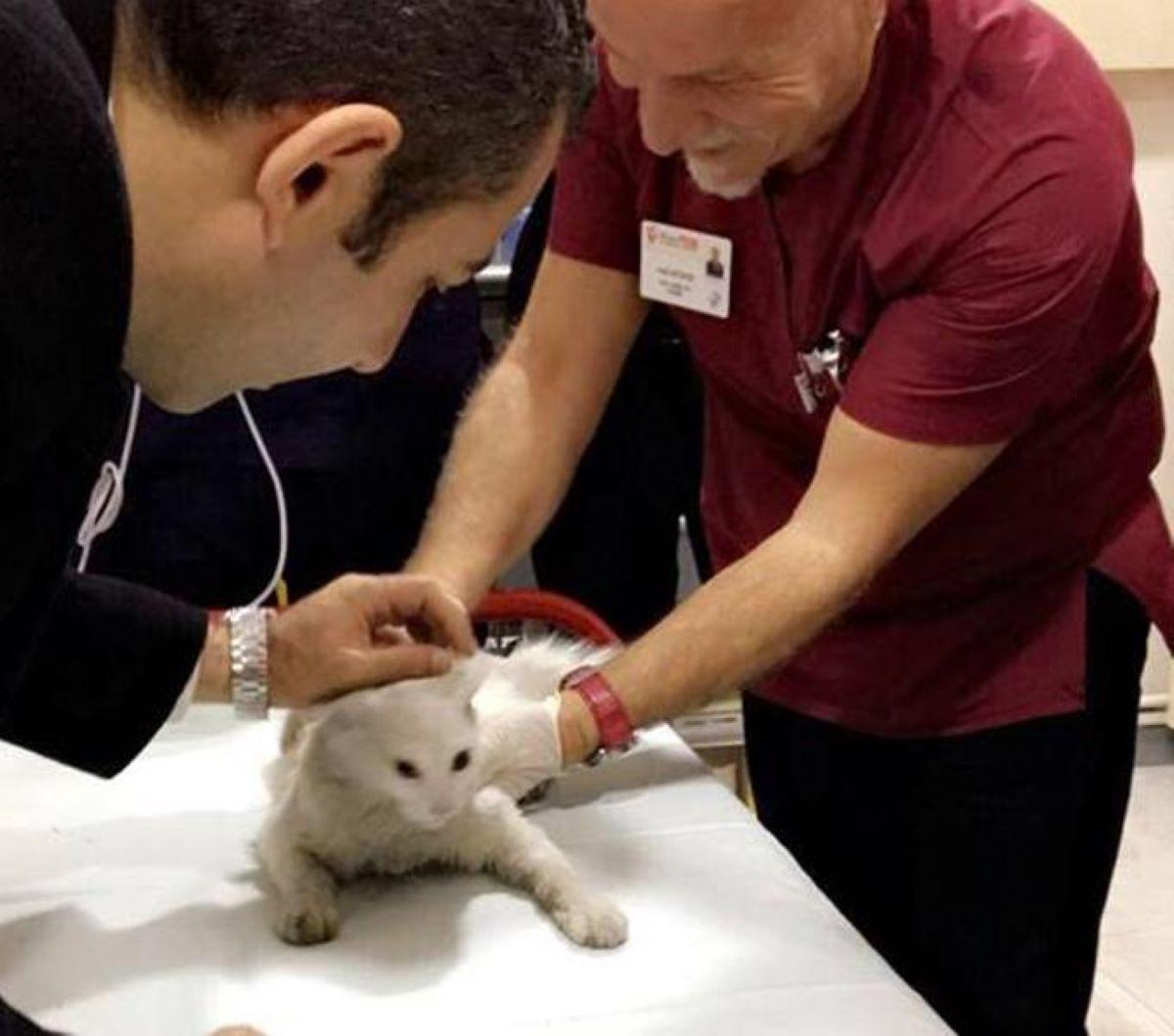 gatto-bianco-con-dottori
