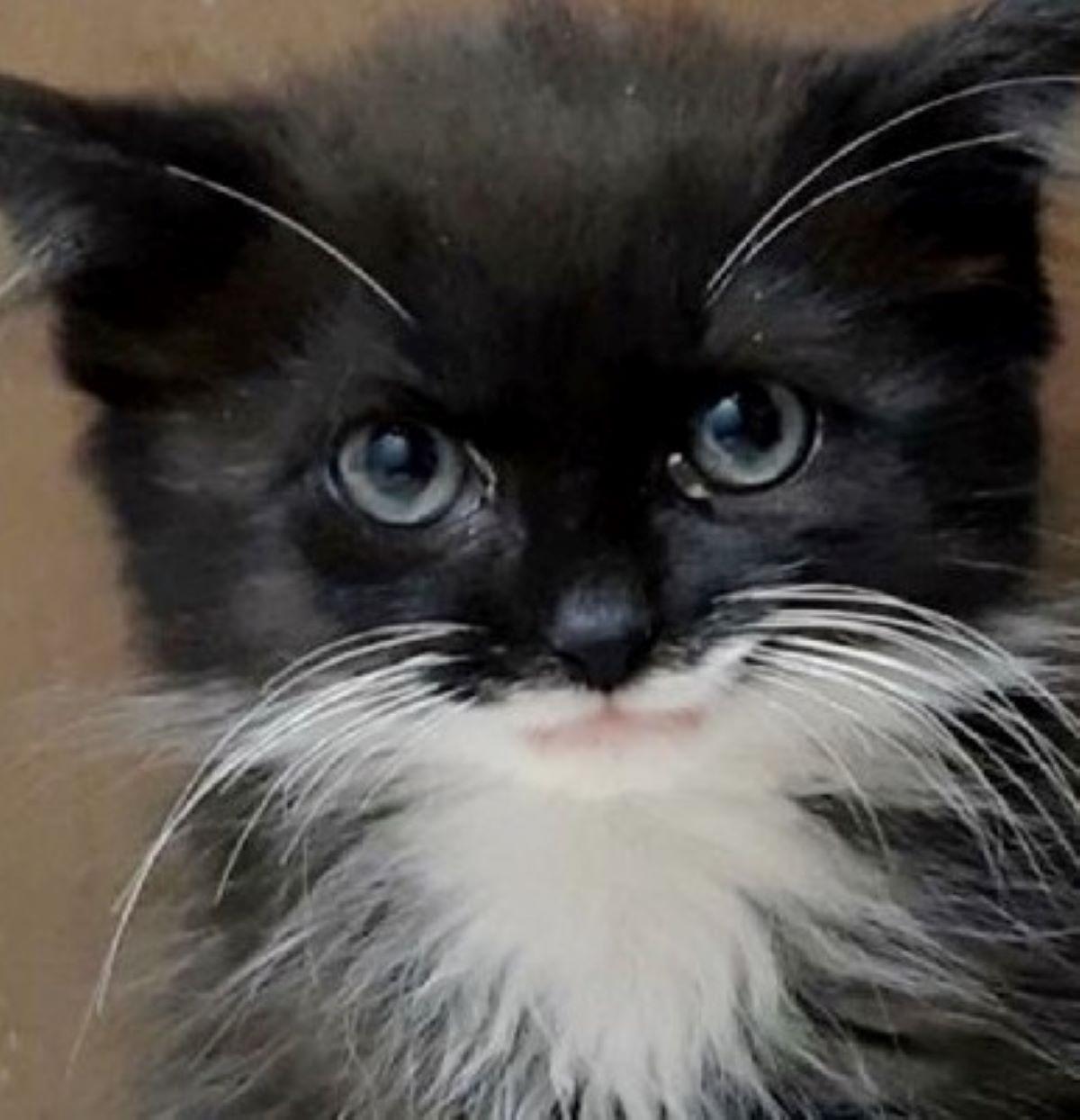 gatto-che-sorride-bianco-e-nero