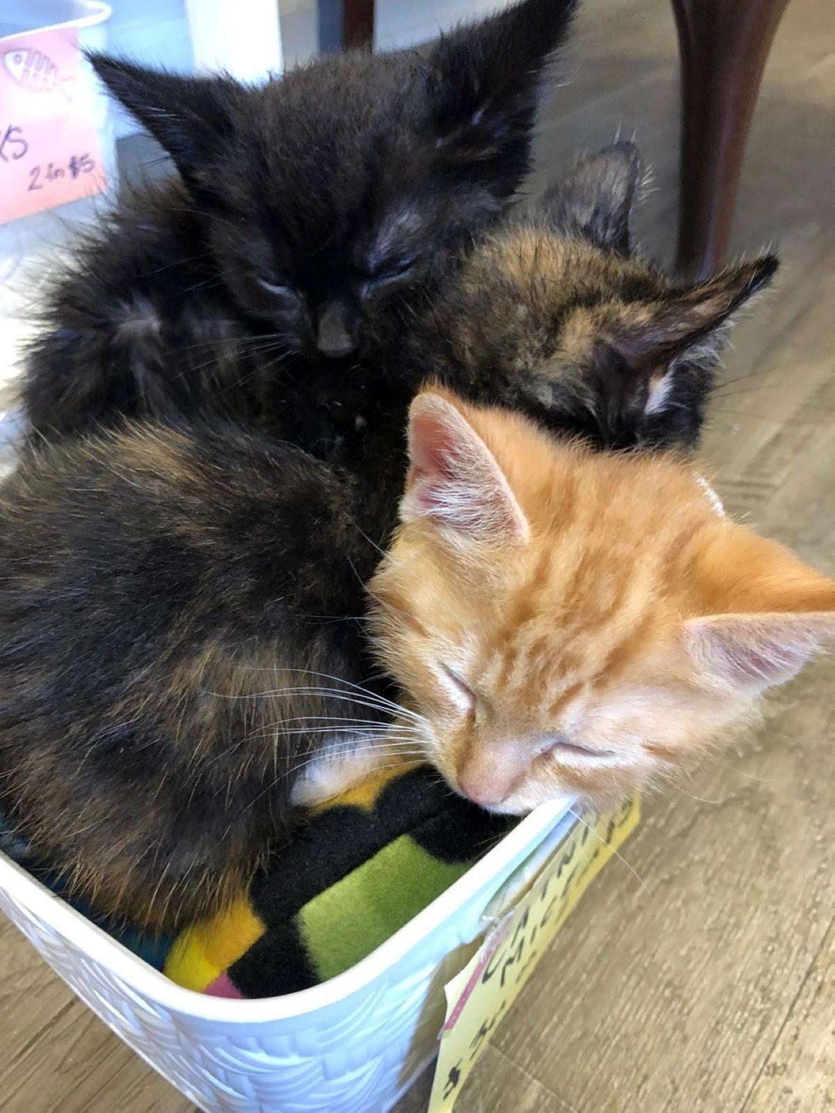 gattini-piccoli-che-dormono