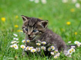 Gatti carinissimi foto e immagini più belle