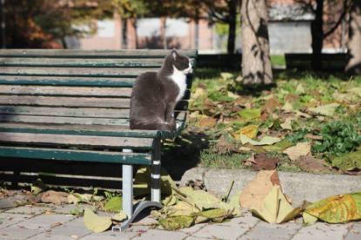 gatto-su-panchina