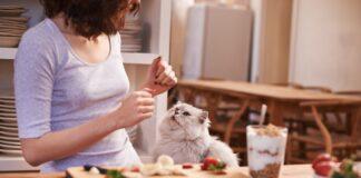 Cosa non dare da mangiare ai gatti