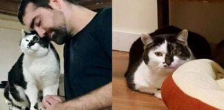 uomo-con-gatto-bianco-e-nero