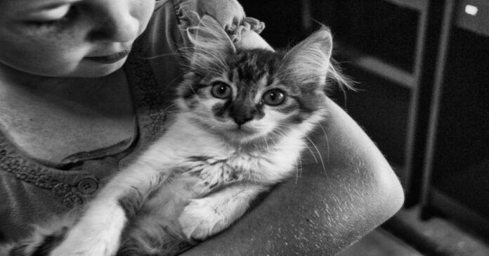 gatto-con-bambina-in-bianco-e-nero