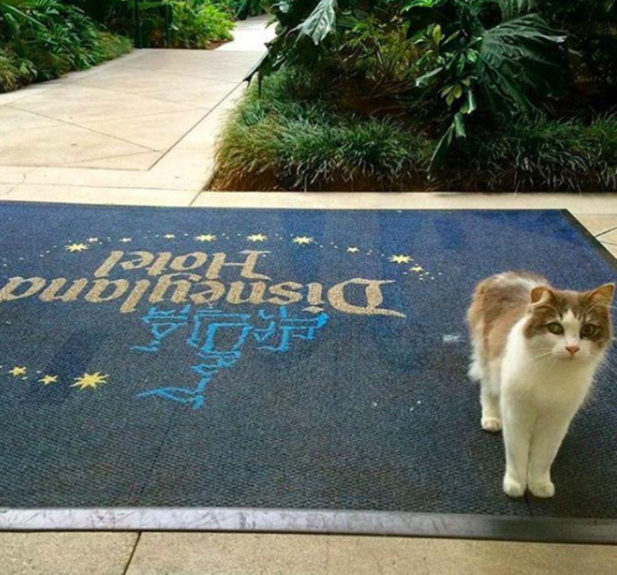 gatto-su-tappetino