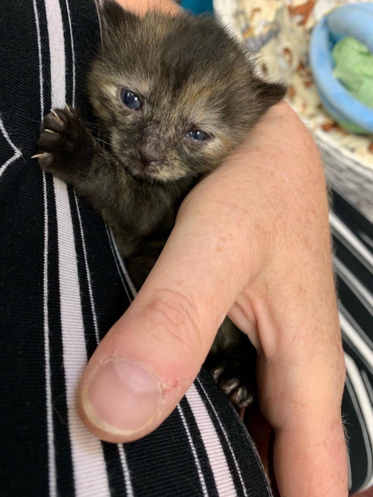 gattino-con-mano-umana