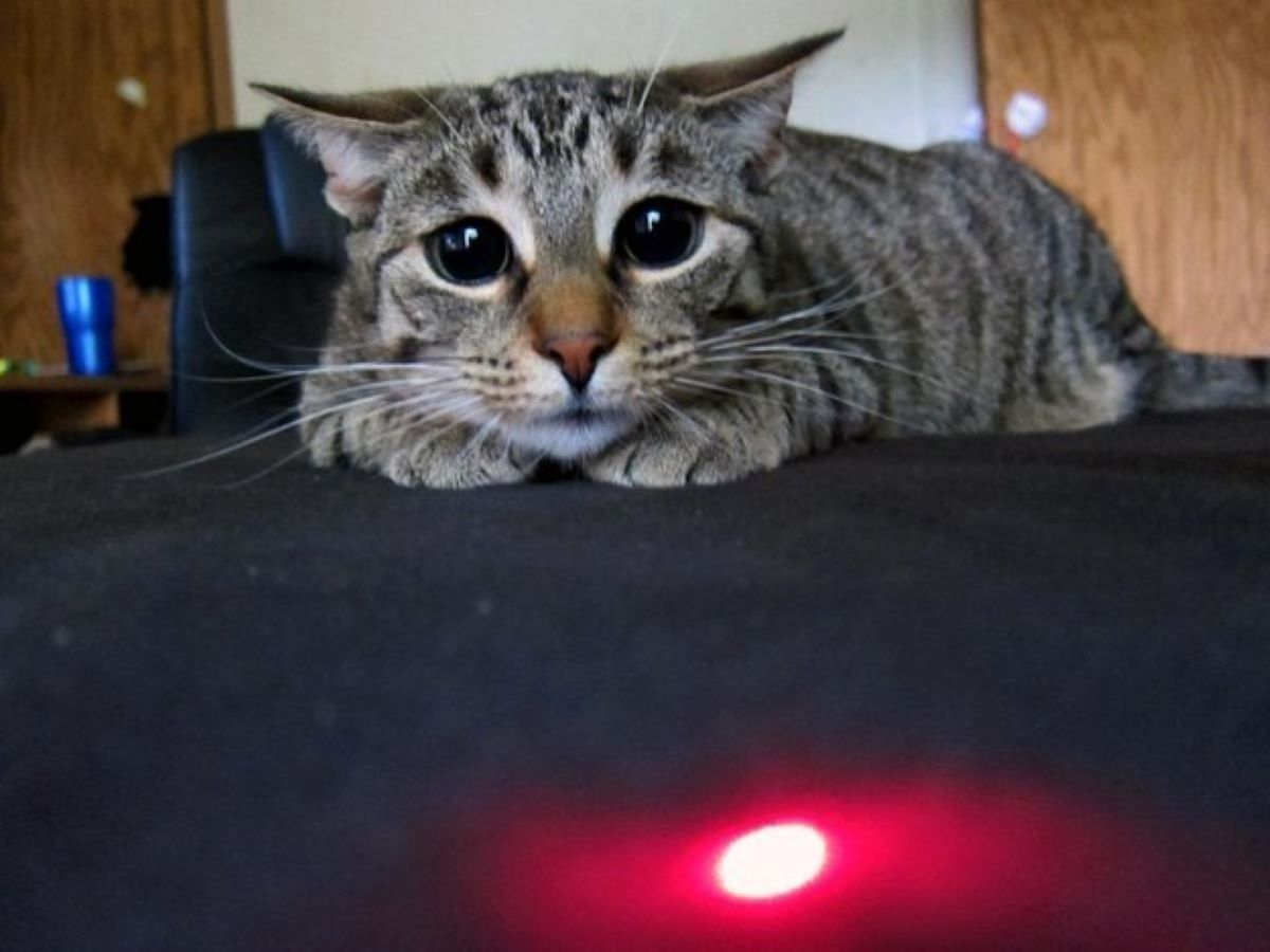 gatto-con-lucina-rossa