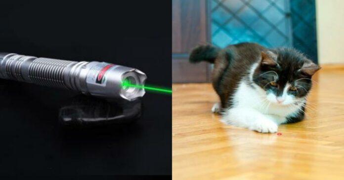 gatto-e-puntatore-laser