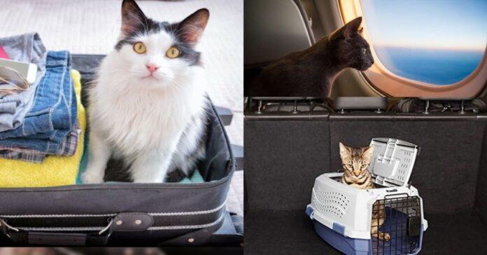 gatti-in-valigia