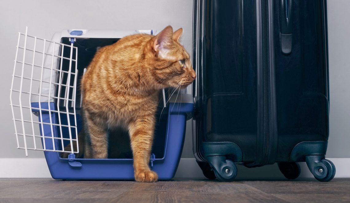 gatto-vicino-a-valigia