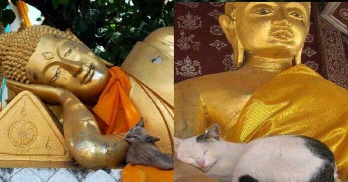 gatti-che-dormono-su-statue