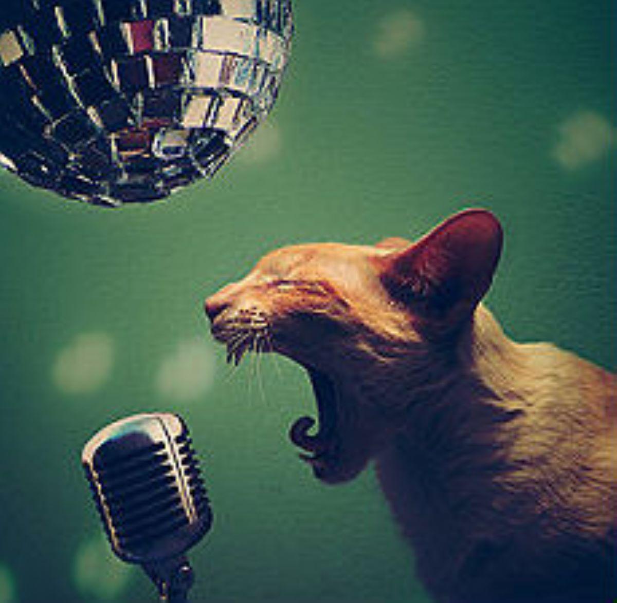 gatto-che-urla--al-microfono