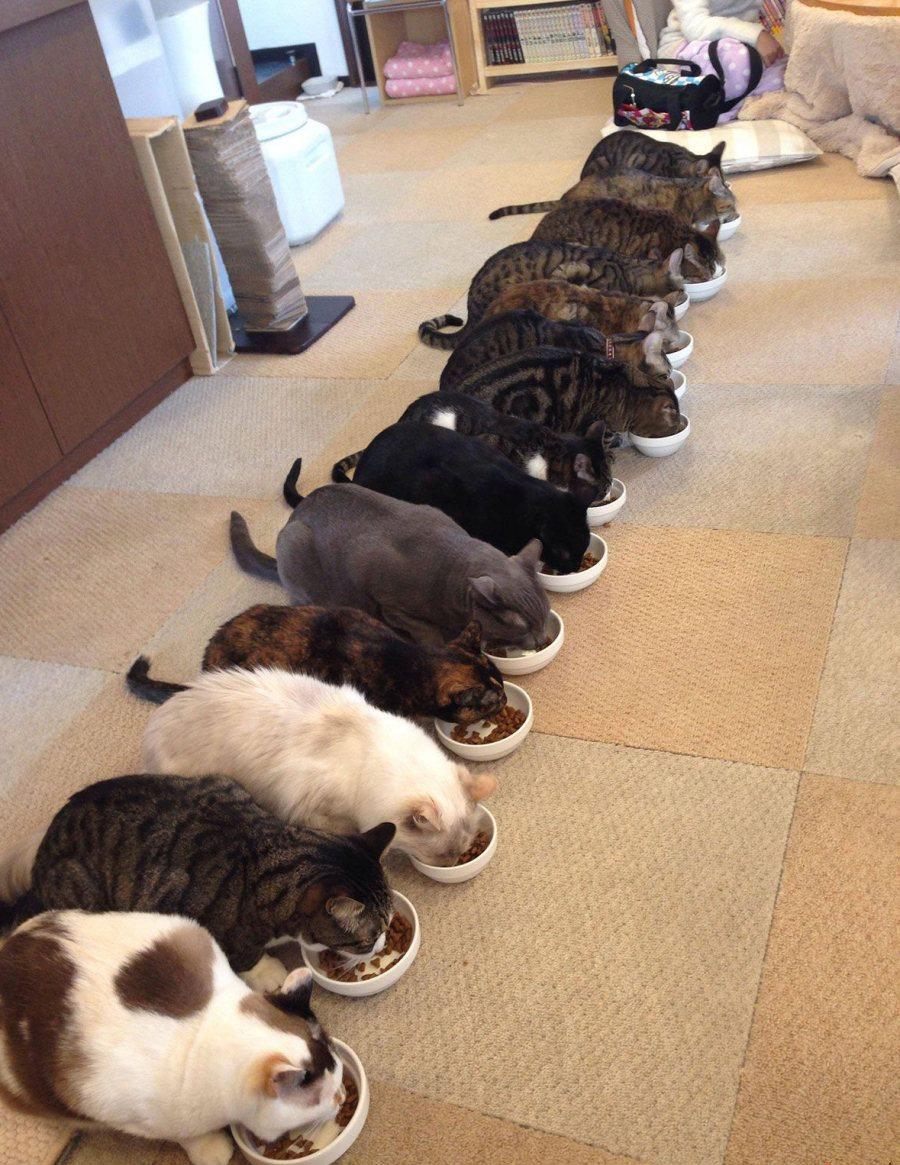 Qual è il cibo preferito dai gatti