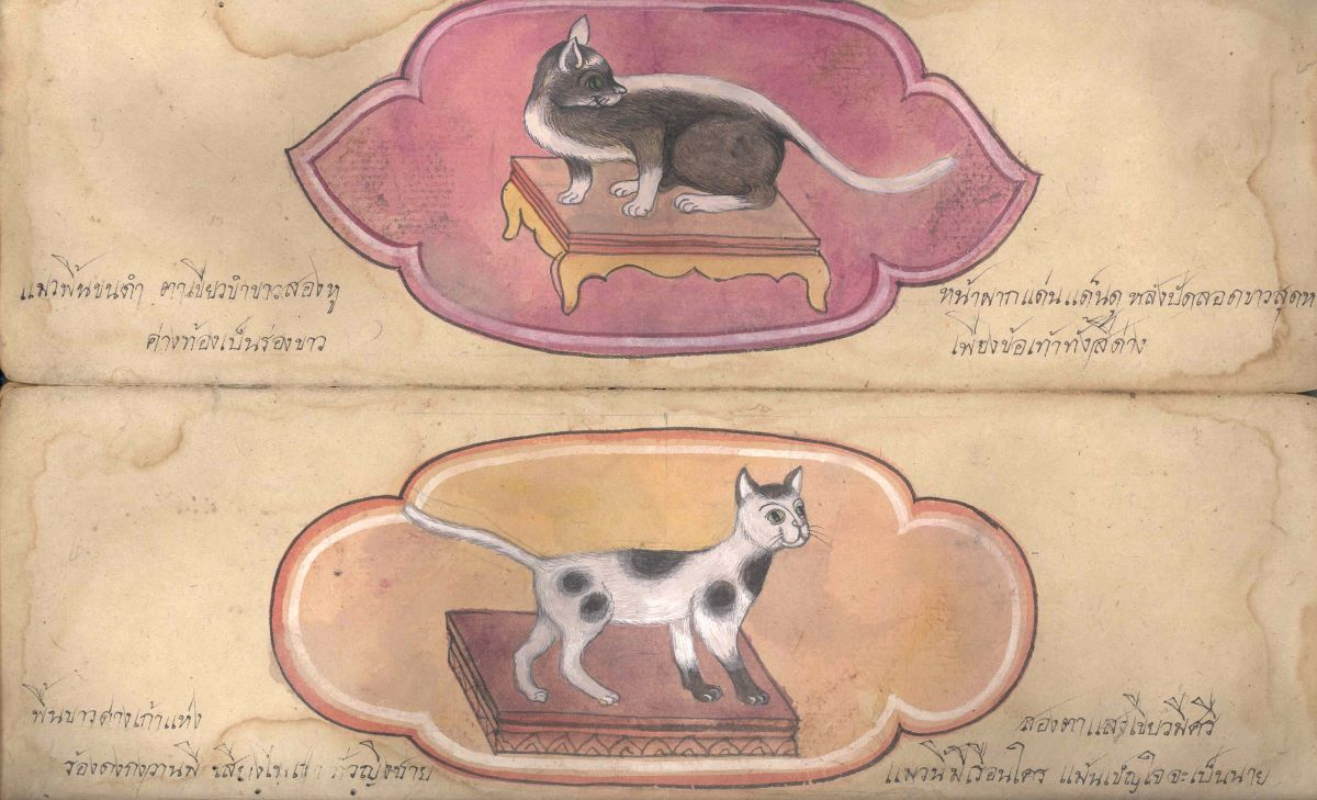 gatti-disegnati