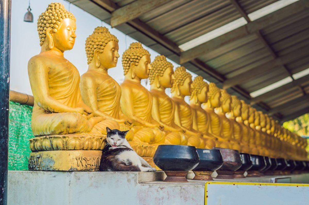 gatto-su-statue-buddhiste