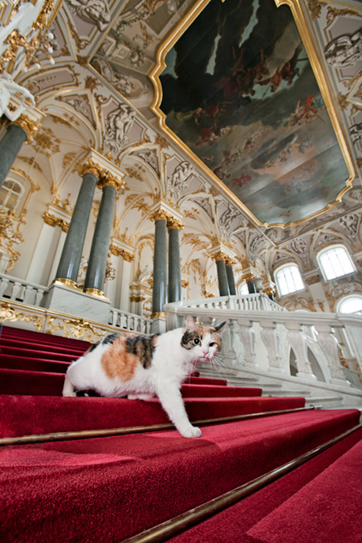 gatto-che-scende-da-scalinata