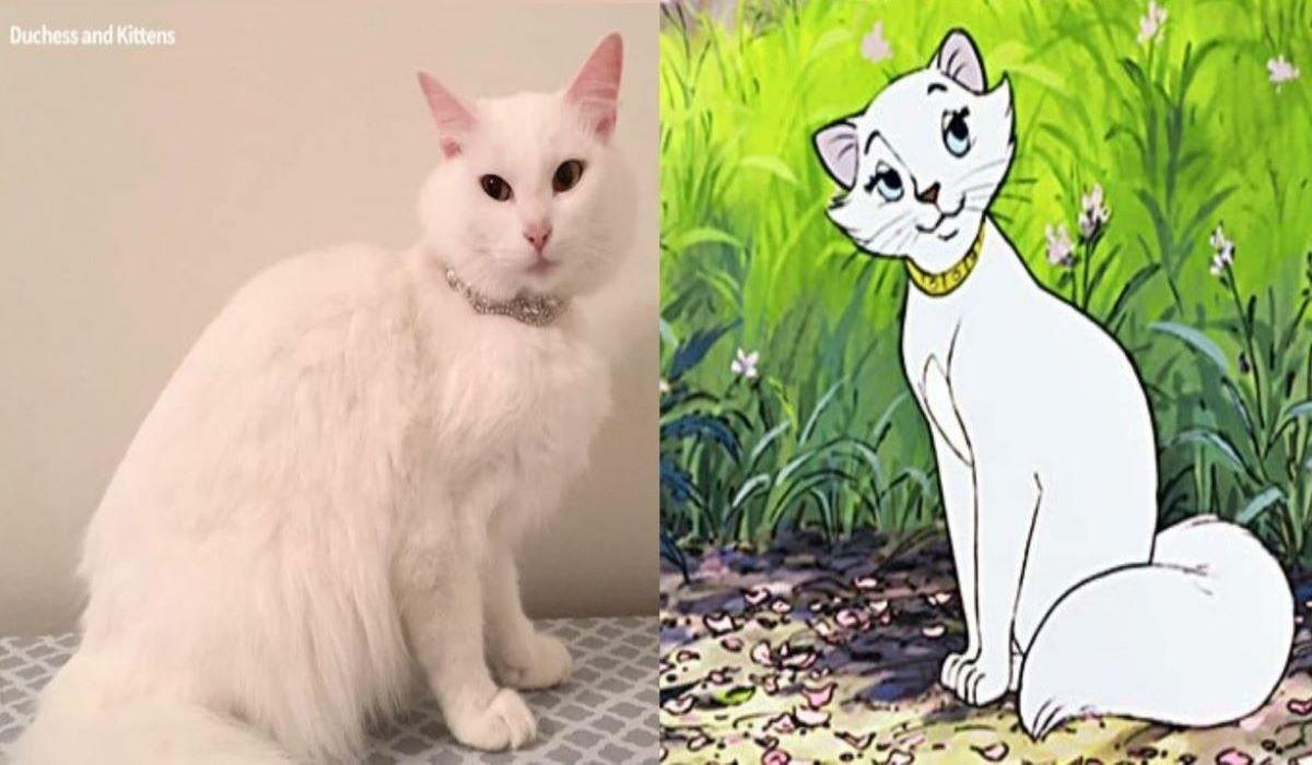 gatta-bianca-con-vicino-gatta-cartone-animato