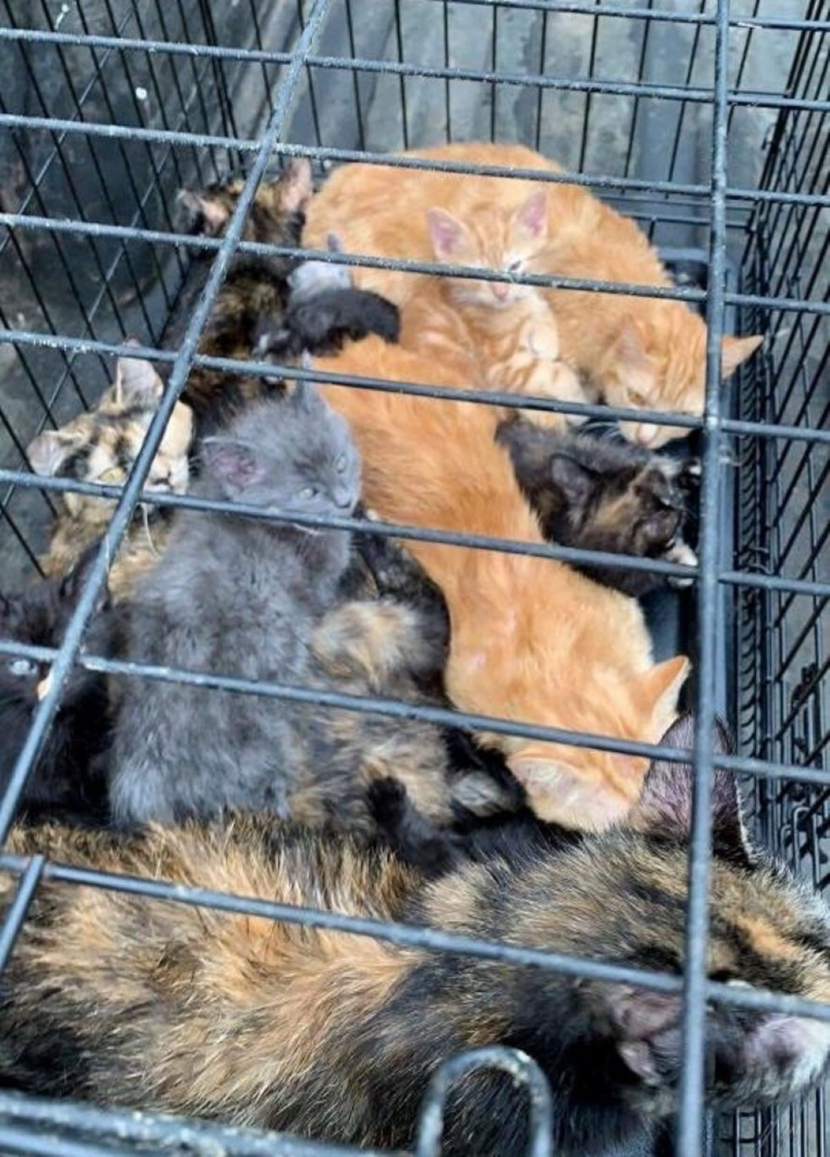 gatti-in-gabbia